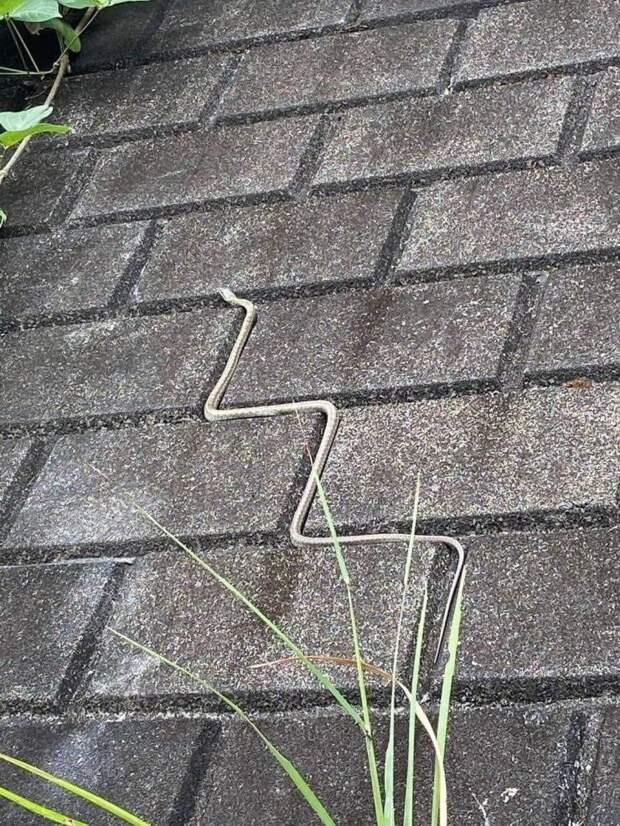 Змея на плитке