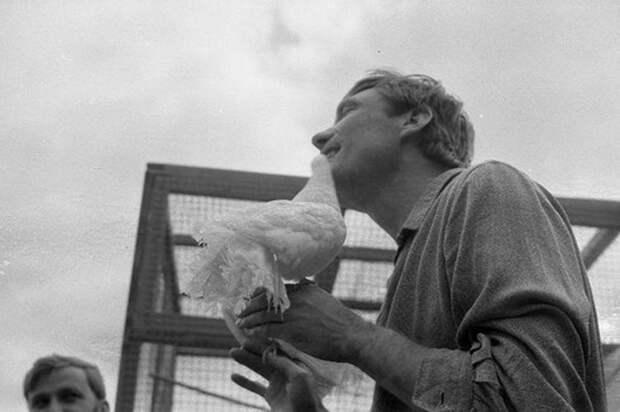 loveandpigeons81 «Любовь и голуби»: детали, факты и редкие кадры из фильма