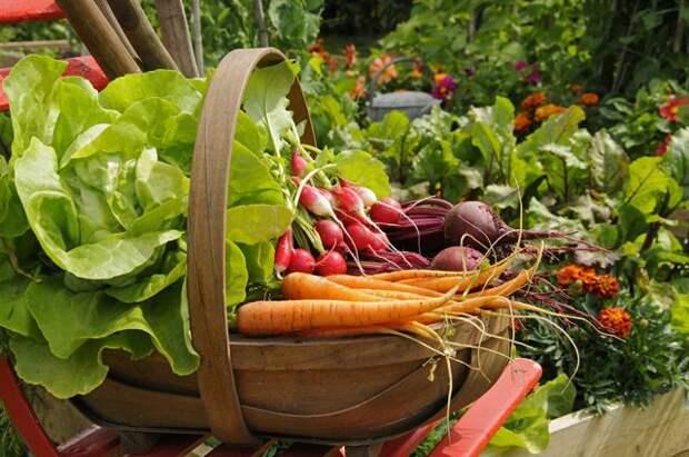 13 простых советов, как выбрать овощи и фрукты без пестицидов