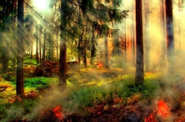 Италия вводит режим ЧС из-за горящих лесов