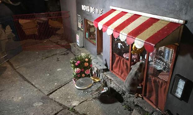 Крошечные магазины для мышей