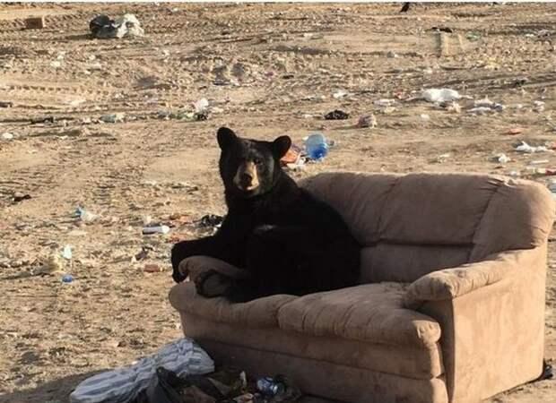 Медведь отдохнул по-человечески