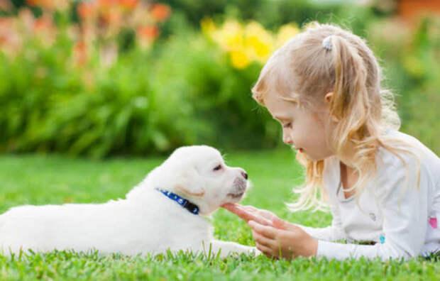 Конфликты между детьми в семье помогают уладить собаки