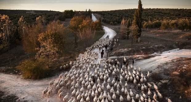 Объявлены победители конкурса Siena International Photo Awards 2019