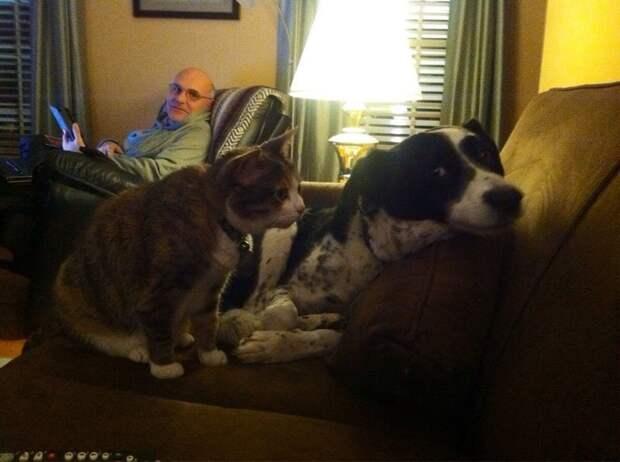 А ну повтори, что тявкнул весело, коты, повадки, смешно, эмоции