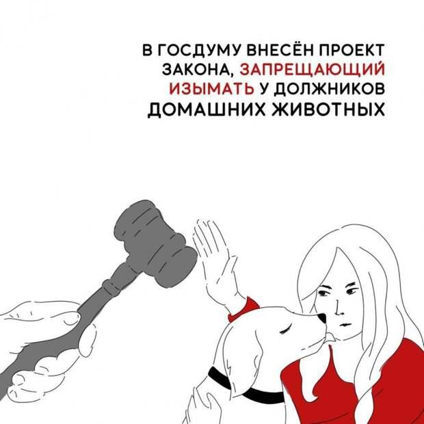 Проект закона, запрещающий у должников изымать домашних животных
