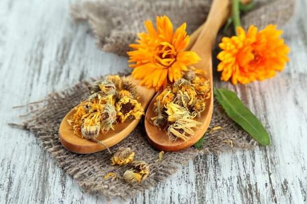 целебные цветы календулы приятны для глаз и полезны