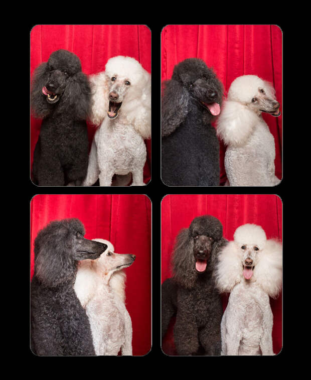 8 милейших фото собак, которые решили сфоткаться в фотобудке