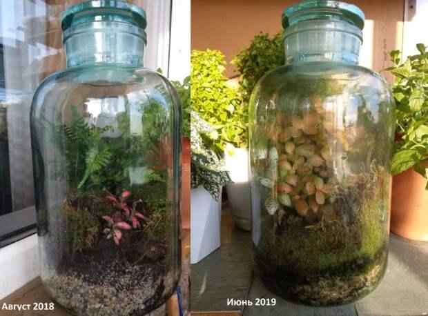 1,5 года растения живут в запечатанной банке. Откуда в ней появляются новые виды?