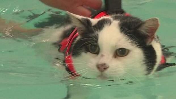 Для похудения коту прописали плавать в бассейне