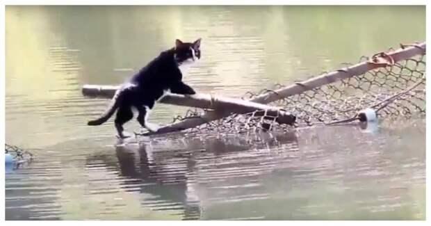 Этого кота не пугают никакие водные преграды!