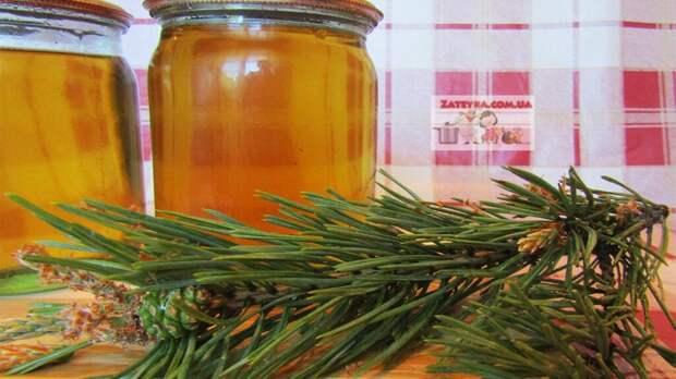 Сосновый сироп (сосновый мёд) из побегов сосны