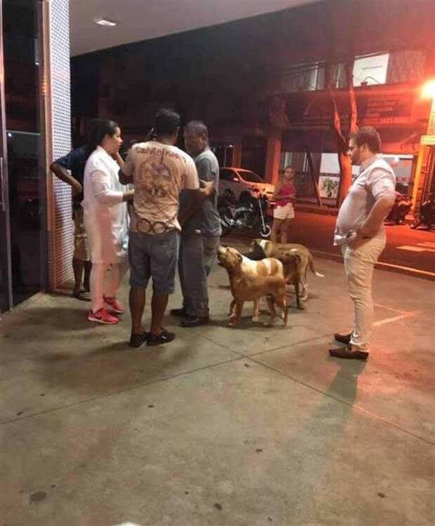 Шестеро собак, задыхаясь, бежали за машиной скорой помощи, ведь она увозила их хозяина
