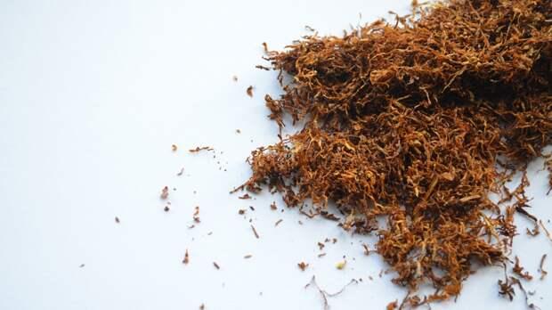 Школьника с отравлением табаком и алкоголем госпитализировали из квартиры в Петербурге