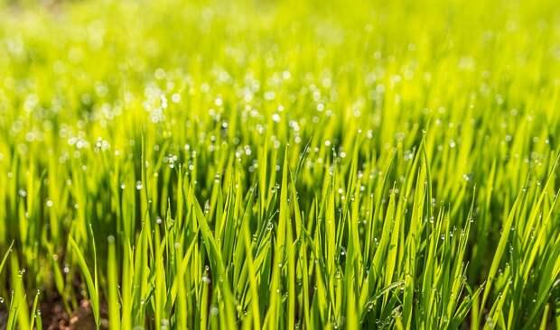 Вытоптанный газон во дворе на Вертолётчиков засеян — Жилищник
