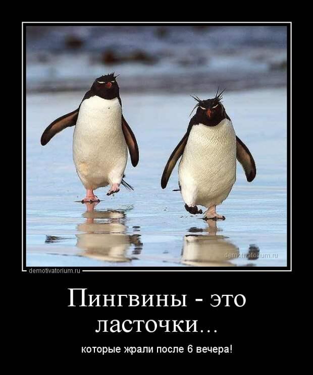 http://demotivatorium.ru/sstorage/3/2014/01/07203822294978/demotivatorium_ru_pingvini__eto_lastochki_36901.jpg