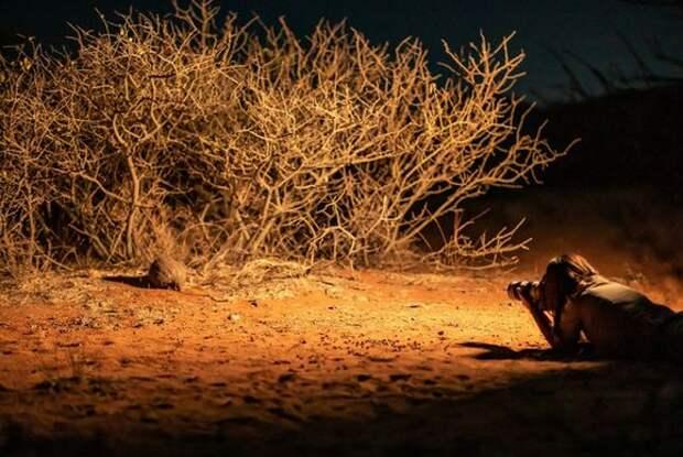 Фотосъемка дикой природы – когда каждая секунда на счету!