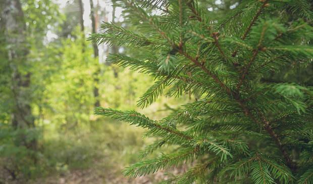 Мумифицированный труп женщины найден в лесу под Екатеринбургом