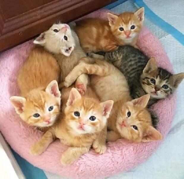 Кошка родила котят на шине. Она не подпускала к ним людей, но однажды исчезла