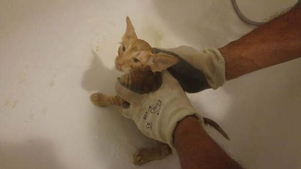 Держись, ушастик, мы тебя вытащим! Спасение рыжего кота, который застрял за электрощитом