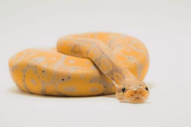 Тест расскажет, кто вы из царства змей
