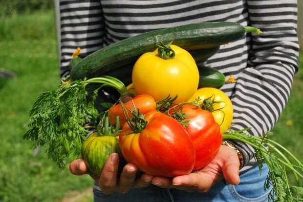 Диета «10 продуктов» — теряем до 3 кг за 7 дней