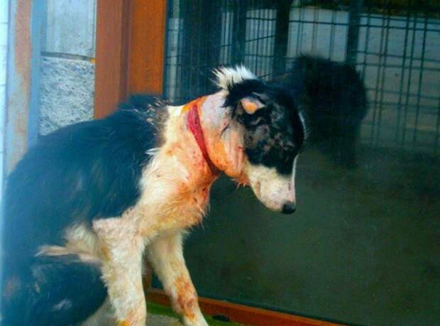 Эту собаку замучили до полусмерти. От причины такого зверства теряется дар речи...