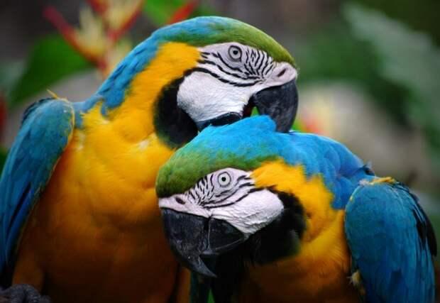 parrot-e1380733527302