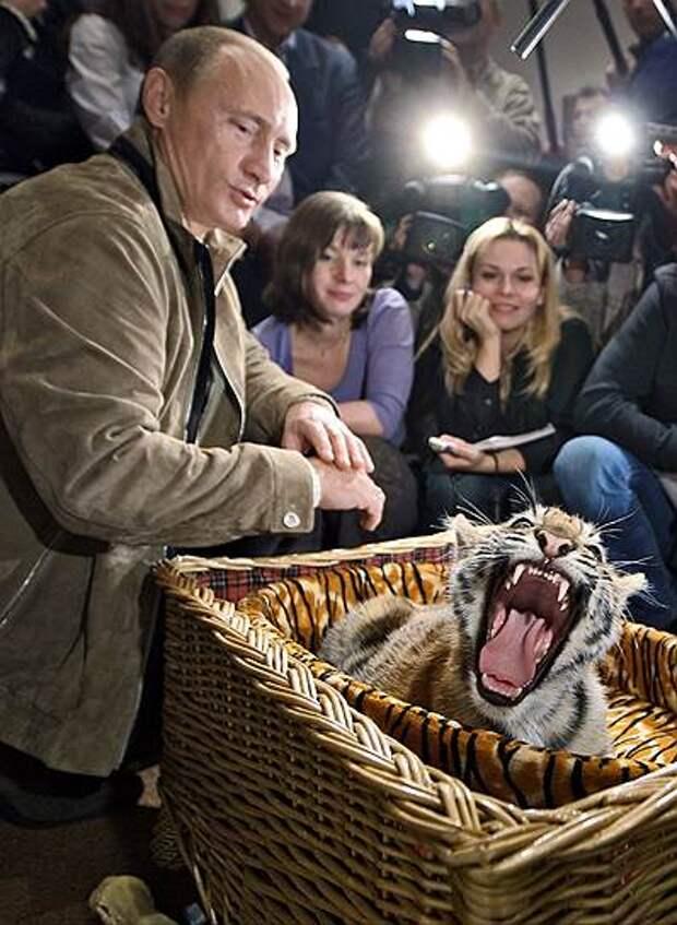 В 2008 году на день рождения господину Путину подарили уссурийского тигренка. Некоторое время питомица президента жила в Ново-Огарево, а потом переехала в зоопарк в Геленджике.