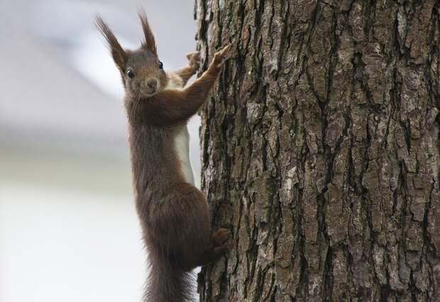 Специалисты «Мосприроды» проведут экоквест по парку «Северное Тушино»
