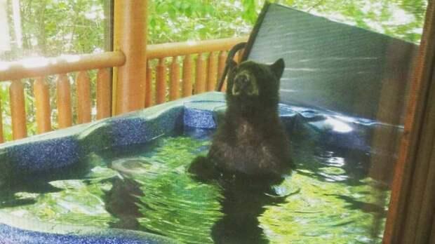 Американский медведь облюбовал джакузи