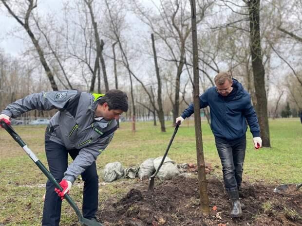 В парке «Торфянка» высадили тридцать шесть деревьев – управа