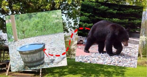 Люди наполняли бочку водой каждый день, но на утро она пустела… Чтобы разгадать эту загадку, они поместили камеру на задний двор!