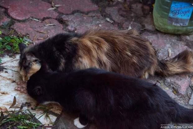 Случилось несчастье... Остались коты без хозяина, без дома, возле леса с лисами.....