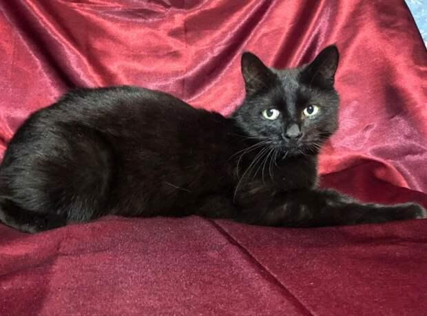 Помогите! Откликнитесь! Славному чёрному котику очень нужен новый дом, хотя бы временный!