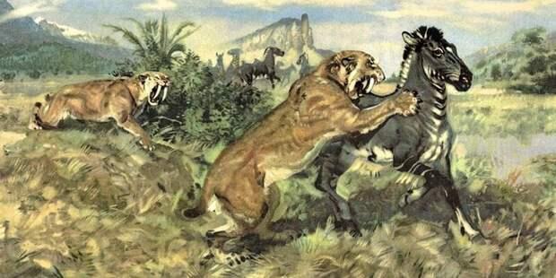 О роли котиков в происхождении человека антропология, динозавры, естественный отбор, кошки, человек, эволюция