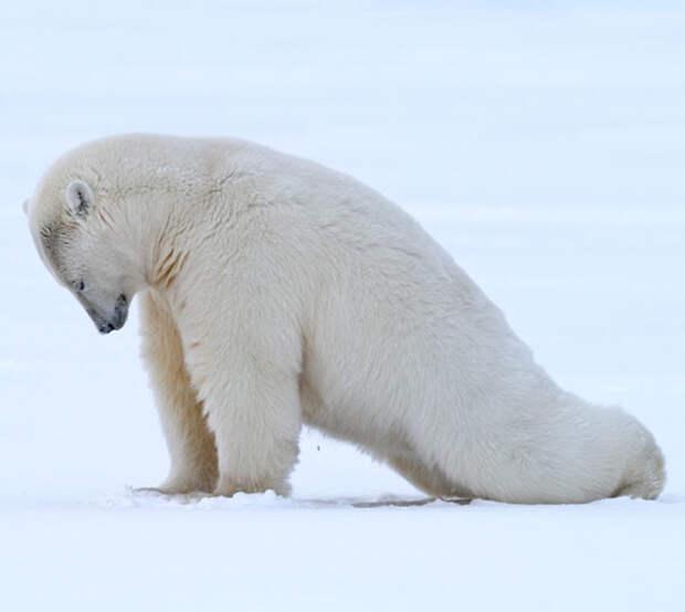 Не боюся ни зимы и ни холода животные, йога, милота, прикол, фото