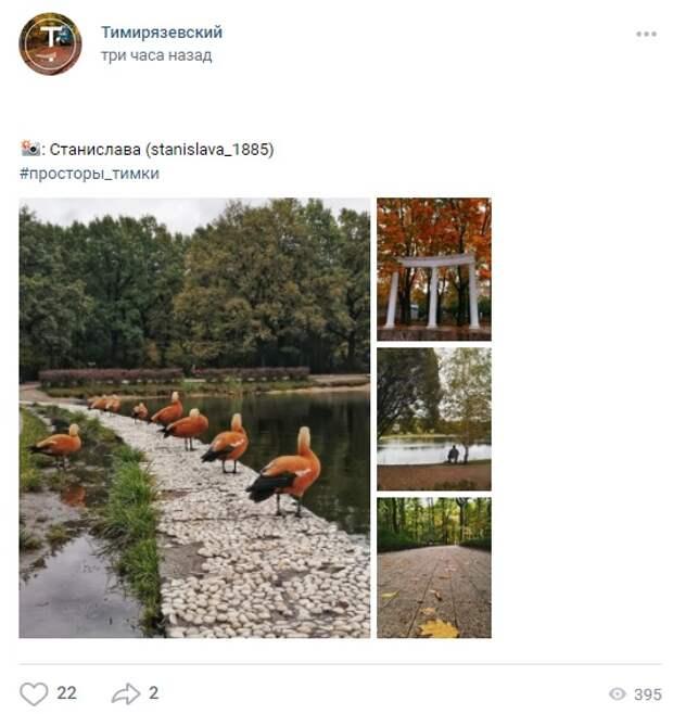 Фото дня: «выставка» огарей в парке «Дубки»