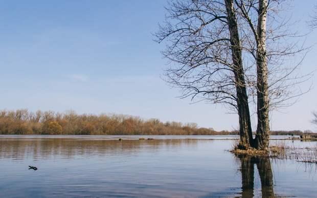 Любимов: Половодье в Рязанской области проходит лучше ожиданий