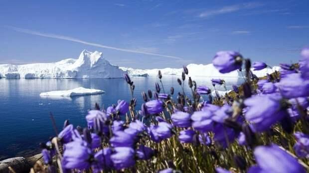 В Арктику может вернуться пышная зелёная растительность