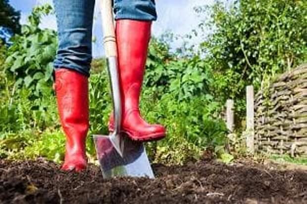 Лопата для копки огорода своими руками. 2 варианта, которые существенно облегчат работу на земле