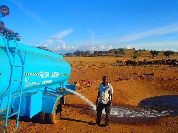 Без него они умрут: сердобольный кениец каждый день привозит воду изнывающим от жажды диким животным