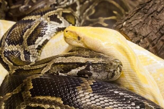 Почему люди боятся змей, и можно ли своими силами справиться с офидиофобией?