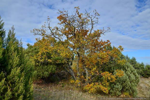 Балаклава. Трудный подъём в осень