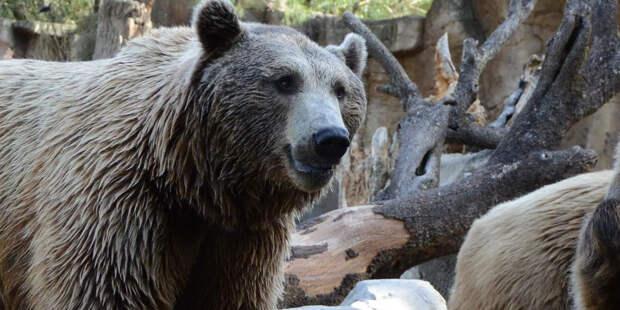Как Правительство поддержит зоопарки?