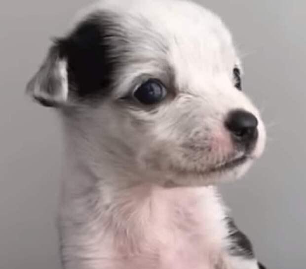 Хозяева были уверены, что щенок не выживет, ведь он родился с патологией пищевода
