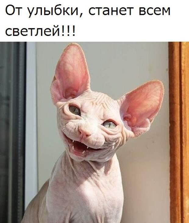 Сегодня вам поднимут настроение забавные и симпатичные котики!