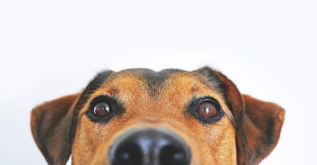 Эколог из Лианозова рассказала собаководам, как правильно убирать за питомцем на прогулке