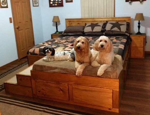 Как выглядит специальная кровать со спальным местом для домашних животных