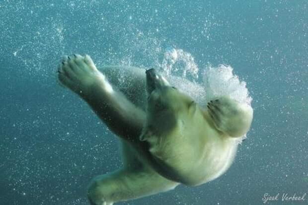 На большой огромной льдине...